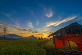 3 Main Sources of Incomes from Rice Farming